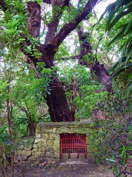 内金城獄(うちかなぐすくたき)首里金城の大アカギ
